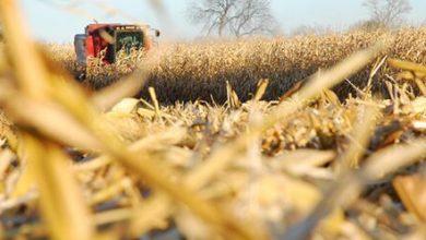 پیشرفت در روابط تجاری کشاورزی آمریکا با چین